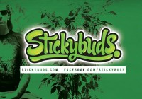 Stickybuds + Texture & light (live elec band)